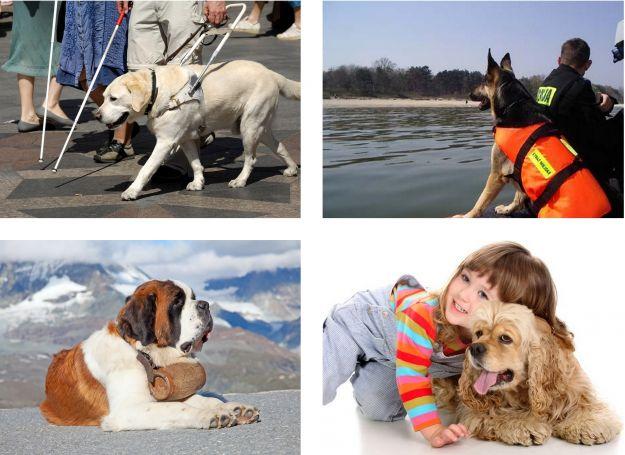 Jakie zawody wykonują psy?