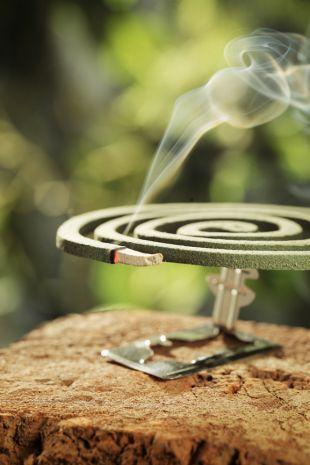 Jak pozbyć się owadów w ogrodzie