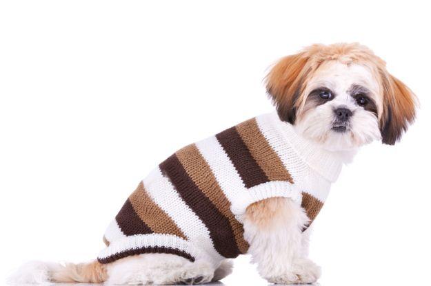Sweterek dla psa – zrób to sama!