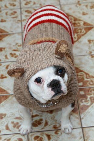 Sweterek dla psa - zrób to sama!