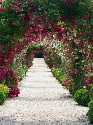 Magiczne róże ogrodowe
