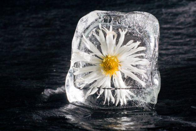 Oryginalne kostki lodu