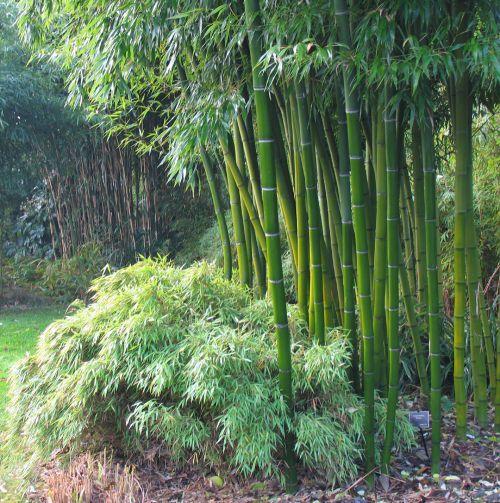 Rośliny egzotyczne w ogrodzie