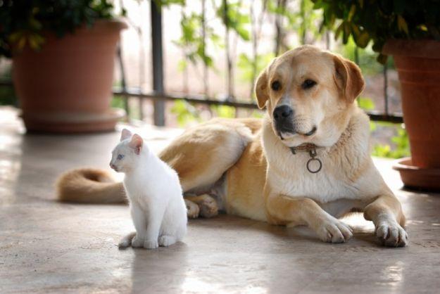 Kot czy pies - jakiego zwierzaka wybrać?