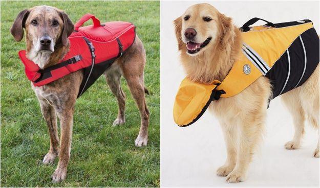 Gadżety dla psów, czyli czego ludzie nie wymyślą...