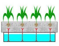 Jak hodować rośliny bez ziemi?