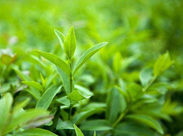 Rośliny, które odchudzają