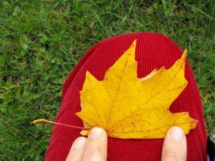 Co można zrobić z jesiennych liści?