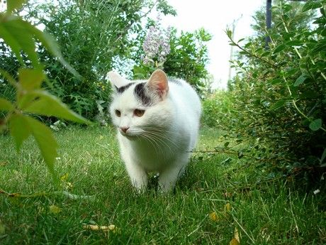 Rośliny i kot pod jednym dachem