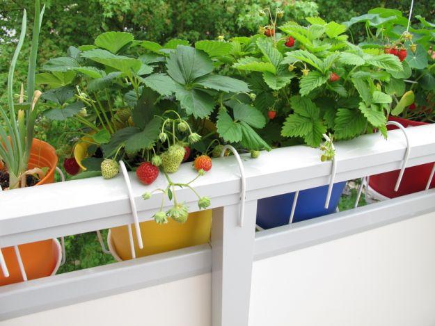 Dziecięcy ogródek na balkonie - co zasiać, co urośnie?