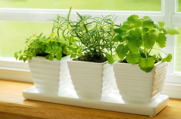 Przykuchenny ogródek