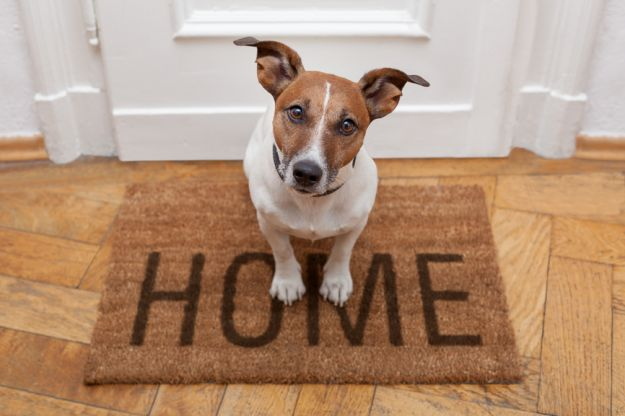 Jak dbać o dom, gdy mieszkają w nim zwierzęta?