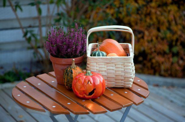 Jesienny niezbędnik do ogrodu