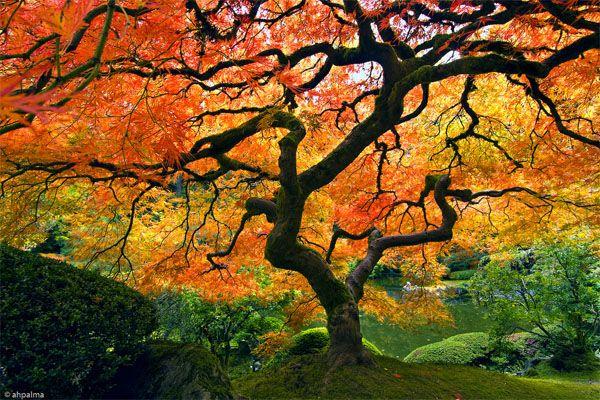 drzewa na jesień