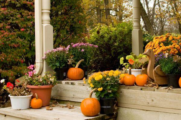 Ogród na jesień