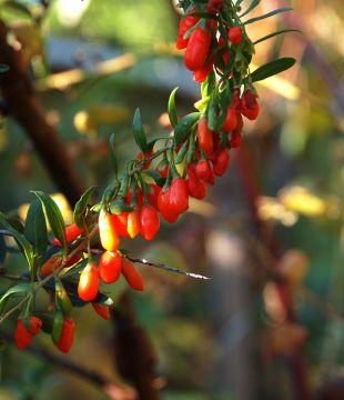 Jak umiejętnie zadbać o ogród?