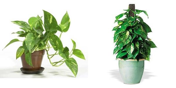 Rośliny doniczkowe dla leniwych