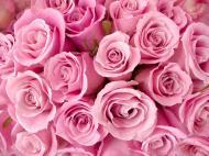 Róże nie należą do bardzo wymagających krzewów.