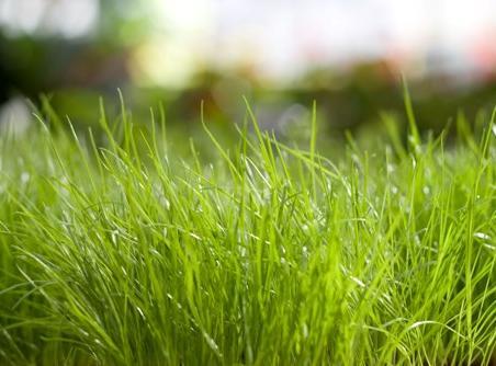 jak kosić trawę, żeby mieć tak ładną