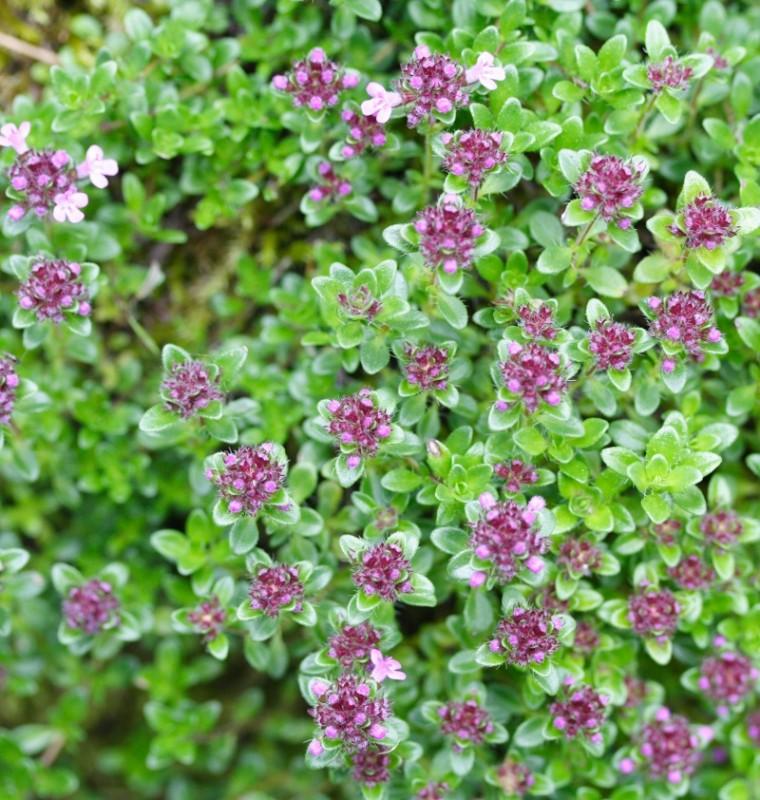 Artnetcom flowering vegetables