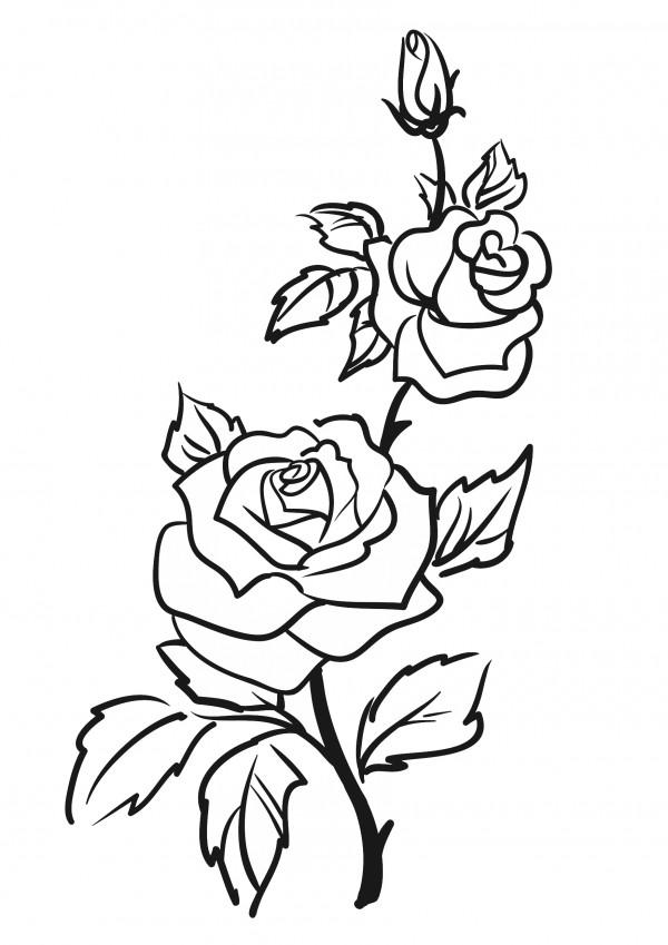 Darmowy szablon malarski do wydruku: róża - Szablony ...